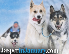 DOG SLEDDING AT PYRAMID LAKE - Jasper in January 2021